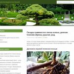 Автонаполняемый сайт о растениях, для заработка на Google Adsense и РСЯ